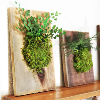 Hanging Fern and Moss Rustic Wood Flat -  Care Free, Real Preserved Plant.
