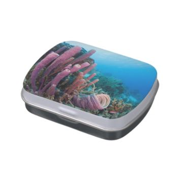 Unique underwater world coral reefs jelly belly tin