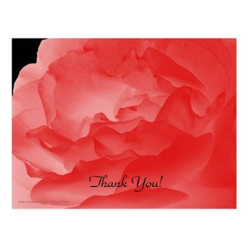 Thank You Postcard, Coral Pink Rose Petals Postcard