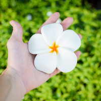 Plumeria or Frangipani Soap - Natural ingredients, The fragrance is unique, Fancy soap, Wash your body or hand