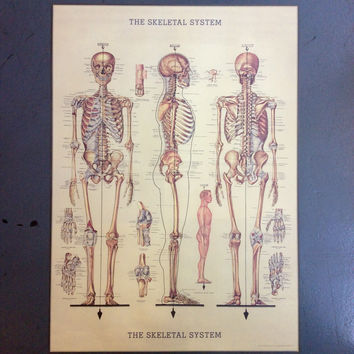 The Skeletal System Print