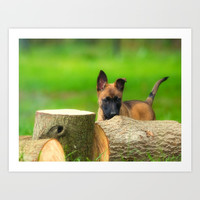Cute Malinois Dog after the wood Art Print by Tanja Riedel