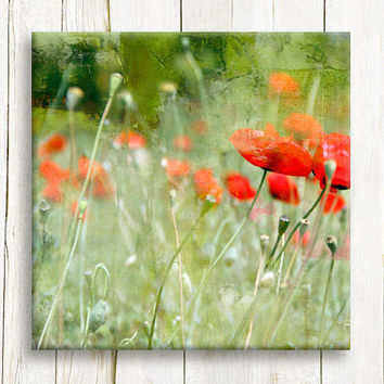 "Red Poppy field, canvas art, 12""x12"", 30x30 cm, free shipping"