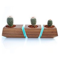 3 Pc. Solid Walnut Wood Planter in Turquoise