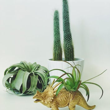 Small Gold Styracosaurus Dinosaur Planter with Air Plant; Dinosaur Planter; Air Plant; Planter; Desk Accessory; Home Decor; Gold Dinosaur