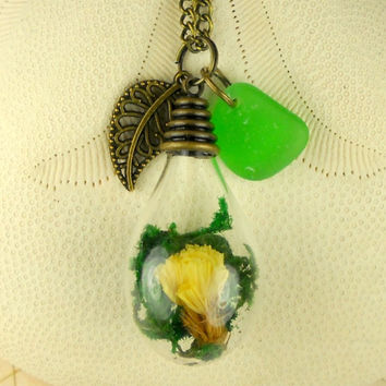 Terrarium Necklace Genuine Sea Glass Jewelry Antique Brass Dried Flower Pendant