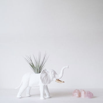 Terrarium Elephant Planter with Air Plant//Fresh Spring Decor