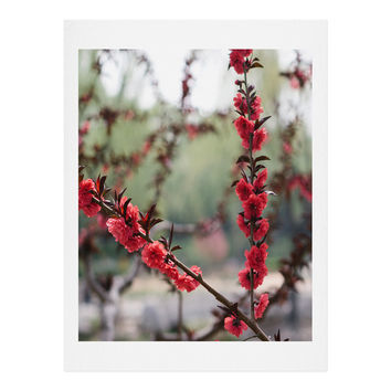 Catherine McDonald Red Peach Blossoms In China Art Print