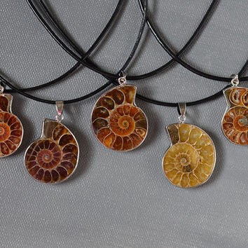 Ammonite Shell Nautilus Fossil Natural Pendant Necklace
