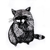Raccoon Print Black And White Anima.. on Luulla