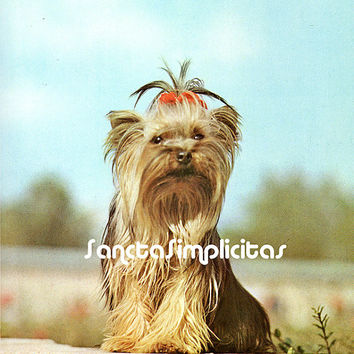 Yorkshire Terrier  Antique Illustration Digital Download Printable Image no. 099