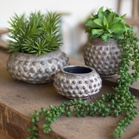 Set Of 3 Ceramic Planters With Dots