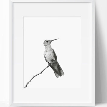 Printable Art, Bird Art, Bird Printable, Digital Print, Bird Print, Wall Art, 8x10, Instant Download, Bird, Black and White, Art