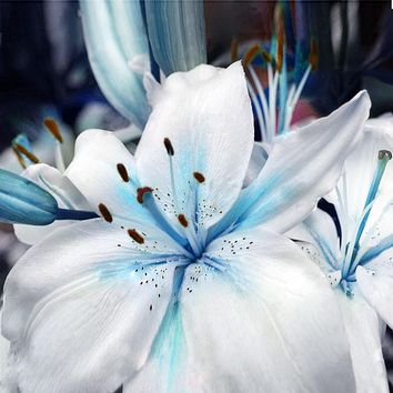 100 pcs/pack Specials Blue Heart Lily Seeds Potted Bonsai Plant Lily Flower Seeds for Home Garden