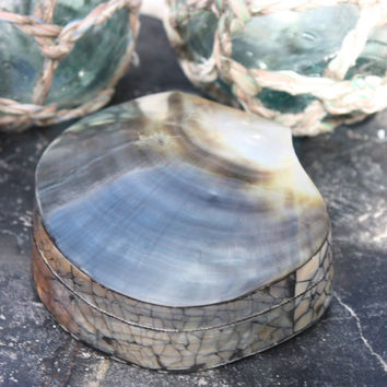 Seashell Keepsake Box Medium - Silver - Coastal Decor