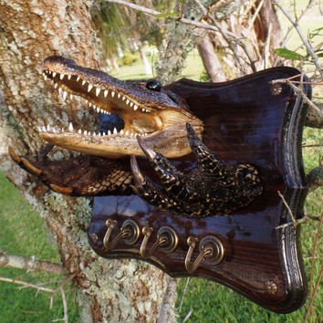 Alligator Jewelry Hanger. Mancave Christmas Gift Wild Fishing Hunting Taxidermy Exotic Art Crocodile Wall Decoration Home Phone Key Holder X