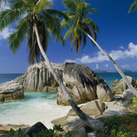A Beach and Palm Trees on La Digue Island Photographic Print by Bill Curtsinger at Art.com