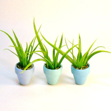 Miniature Dollhouse Clay Pots with Artificial Air Plants Set of Three in Blue Hues