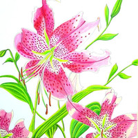 Stargazer Lily  Original Drawing in Pen and Colored Pencil
