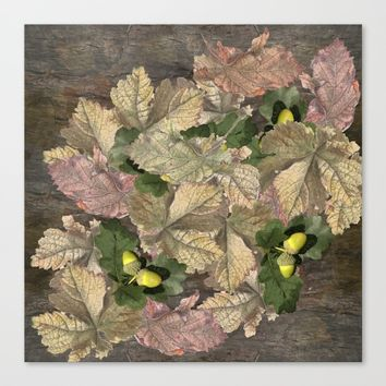 Acorns in Autumn Canvas Print by anipani