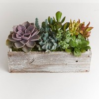 "LIVE 12"" White Wood Pre-Potted Succulent Planter - Ships Alone"