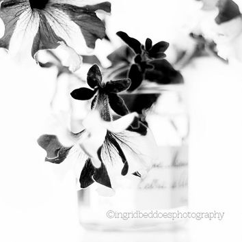 black and white photography - Petunia flower - elegant flower and vase photograph - minimalism fine art photography - still life