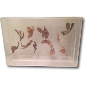 11 Real Butterfly Specimen In Flight Vintage Collection Wall Art ** Last Minute Gift Quick Shipping **