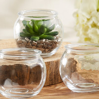 Terrarium Bowl - Set of 12