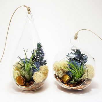 Bliss Gardens Air Plant Terrarium / Juniper Forest