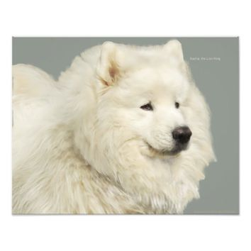 "Samoyed Art; 19"" x 13"", Kodak Prof. Photo Paper"