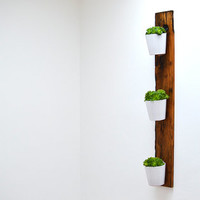 Reclaimed French Wagon Oak Vertical Planter / Wall Garden