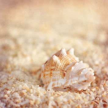 Seashell Number 1 - Single Peach Sea Shell on the Sand - Surreal Beach Shell Photo Sand Jersey Shore 8x8 fine art print