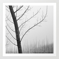 Young Ploplars. Bw. Foggy morning by Guido Montañés