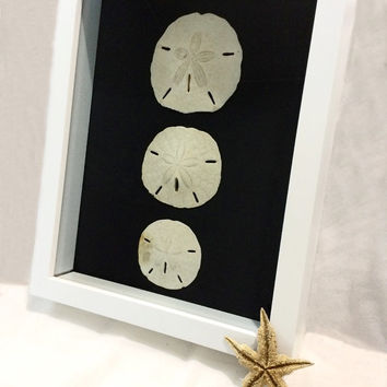Unique Sand Dollar Wall Decor, Sea Shell Framed Art, Sand Dollar Art, Ocean Wall Art, Beach Home Decor, Cottage Wall Hanging, Unique Gift