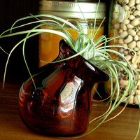 Glass Round Amber  Sitting Vessel for Air Plants or a Small Terrarium
