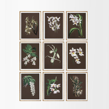 Orchid Shabby Chic Floral Print SET OF 9. A4 Size. UNFRAMED White Orchids Dark Brown White Flowers Botanical Natural Home Decor Wall Art