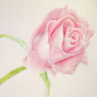 Simple Rose Art Print by Susaleena