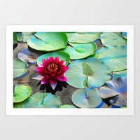 Red water lily Art Print by Claude Gariepy