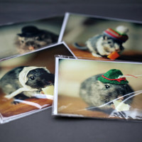 Note Card Set Gerbils In Hats Folded Photo Cards With Envelopes (4)