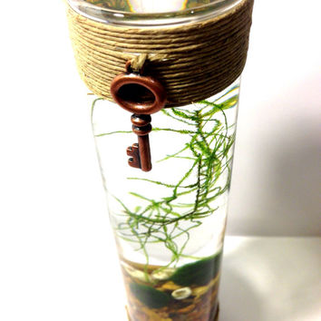 Marimo Steampunk Hemp Terrarium with Java Moss Buddy / Home Decor / Office Decor / Home and Garden