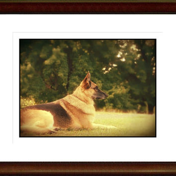 German Shepherd Photography Dog,black,tan,Gifts under 25,pet,beautiful eyes,herding dog,police dog,shepherd,gift for german shepherd lovers