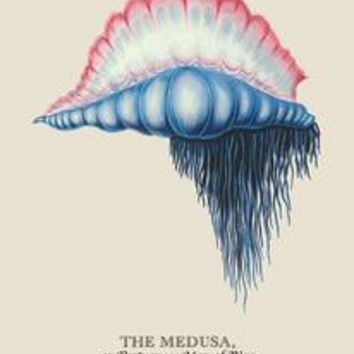 Medusa, or Portuguese Man of War: Fine art canvas print (12 x 18)
