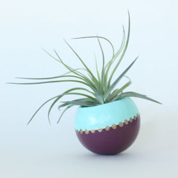 Air Plant Planter with Air Plant - Aqua, Purple with Gold dots