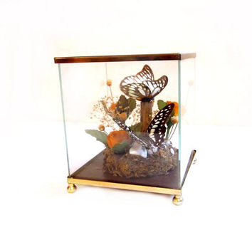 Preserved Butterflies, Glass Box Case Display / Terrarium