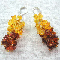 Natural Amber Cluster Earrings Multi color Yellow Brown Beaded Dangle Earrings Natural Organic Jewelry Baltic Gold