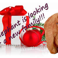Little elephant is looking for a new family!!!