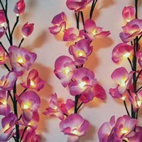 Orchid Lights