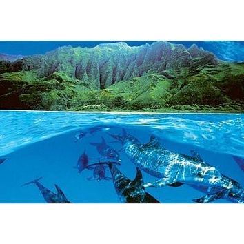DOLPHIN ISLAND POSTER Amazing Tropical Shot NEW 24x36