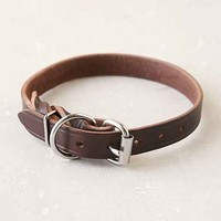 Forager Co. Braided Leather Dog Collar- Brown