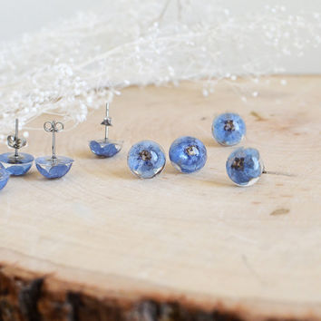 forget me not earrings, real flower earrings - earring studs - surgical steel studs, real flower jewelry, gift for a woman, gift under 30
